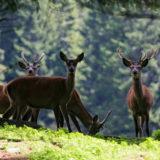 Dolomiti Pic - Immagini dalle Dolomiti di Anton Sessa